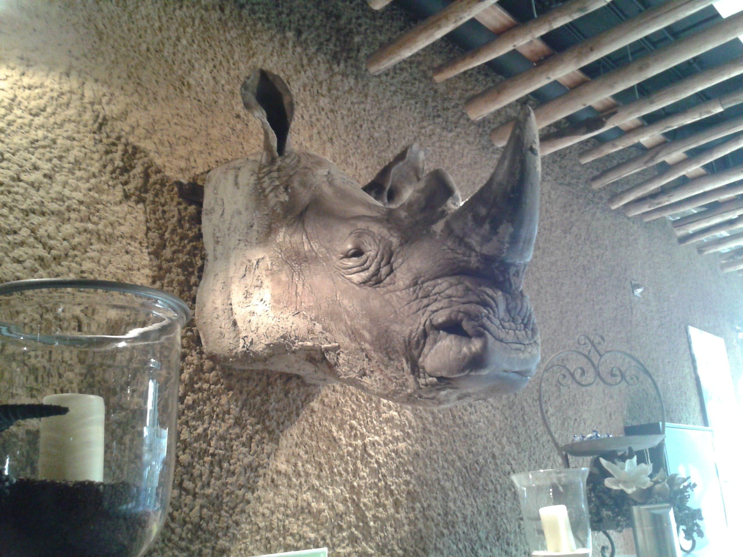 Modellen & Reconstructies | Neushoorn | Gaia Zoo