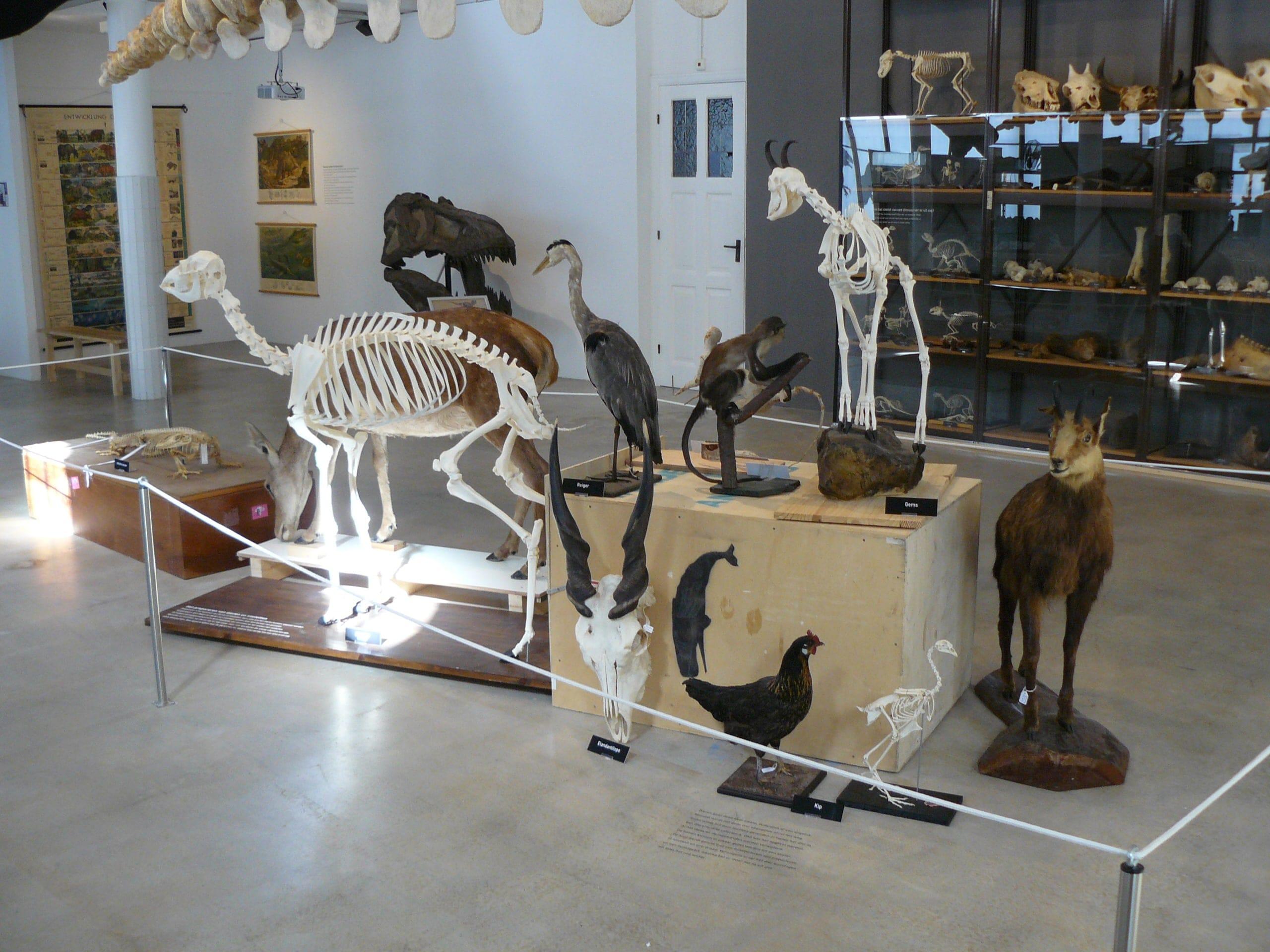 Expo & Educatie | Expo | Natuur Museum Brabant