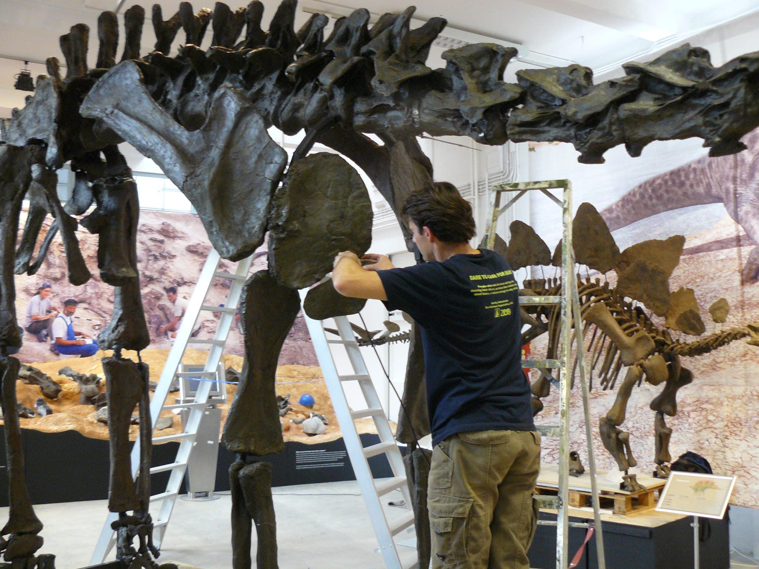 Expo & Educatie | Expo Dino III | Natuur Museum Brabant
