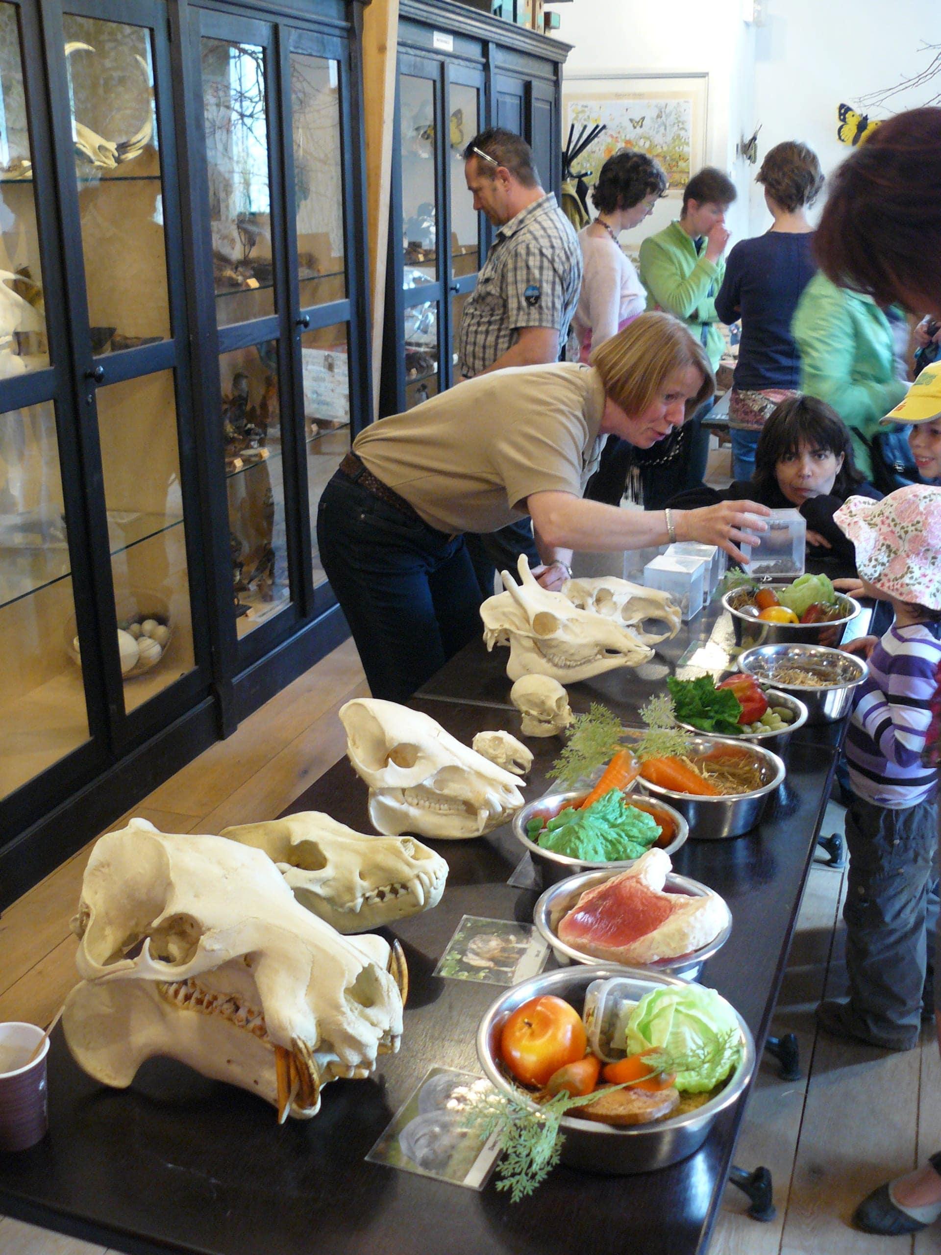 Expo & Educatie | Expo schedels | Gaia Zoo
