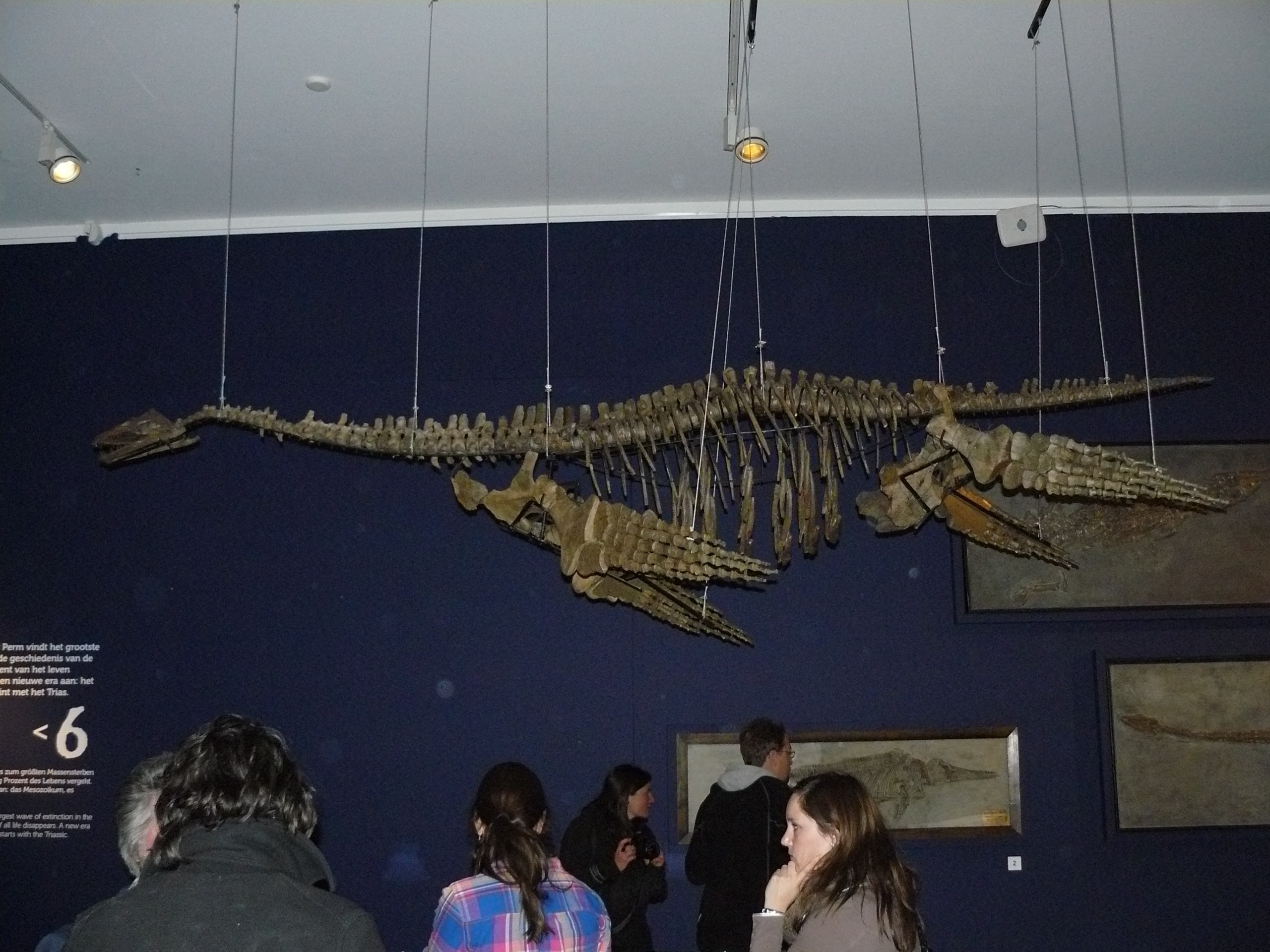 Fossielen & Dinosauriërs | Plesiosaurus | Twentsewelle