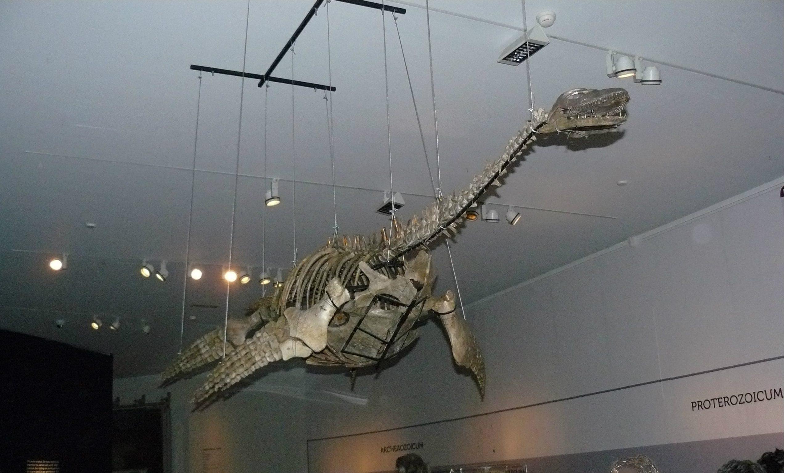 Fossielen & Dinosauriërs | Plesiosaurus IV | Twentsewelle