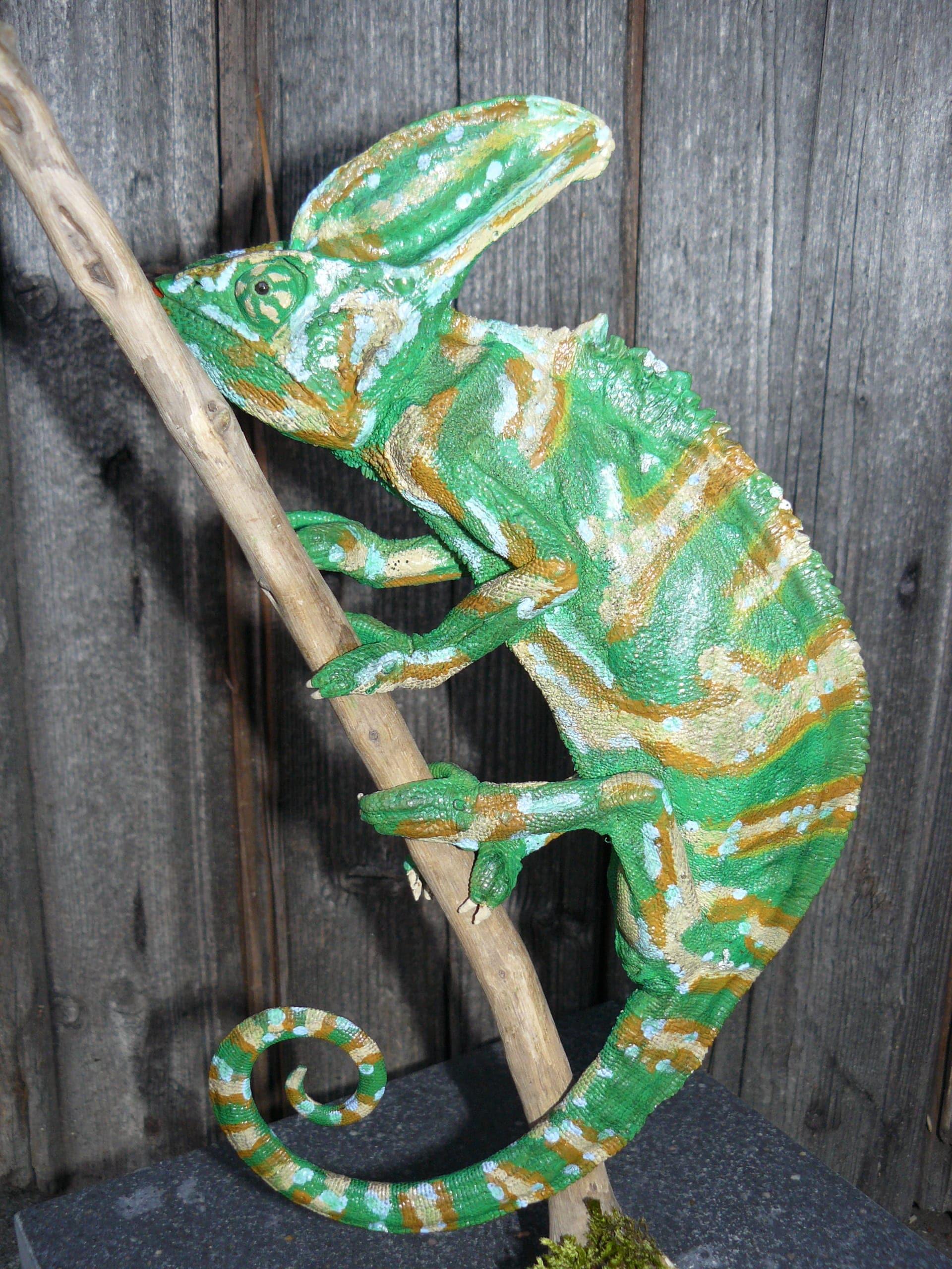 Huidpreparaten | Kameleon | Rotterdam Natuur Museum