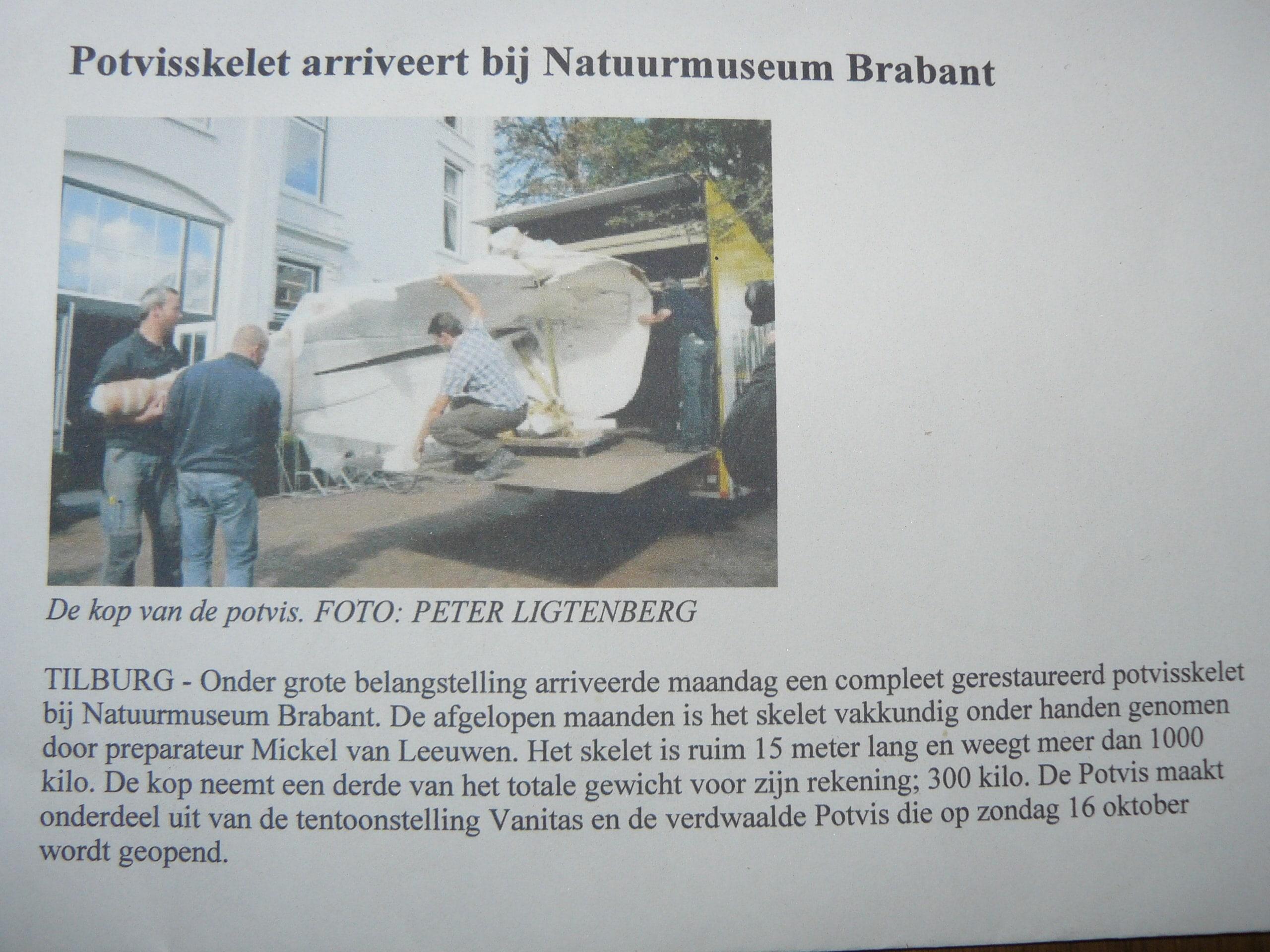 Pottwal Natuur Museum Brabant (NL)