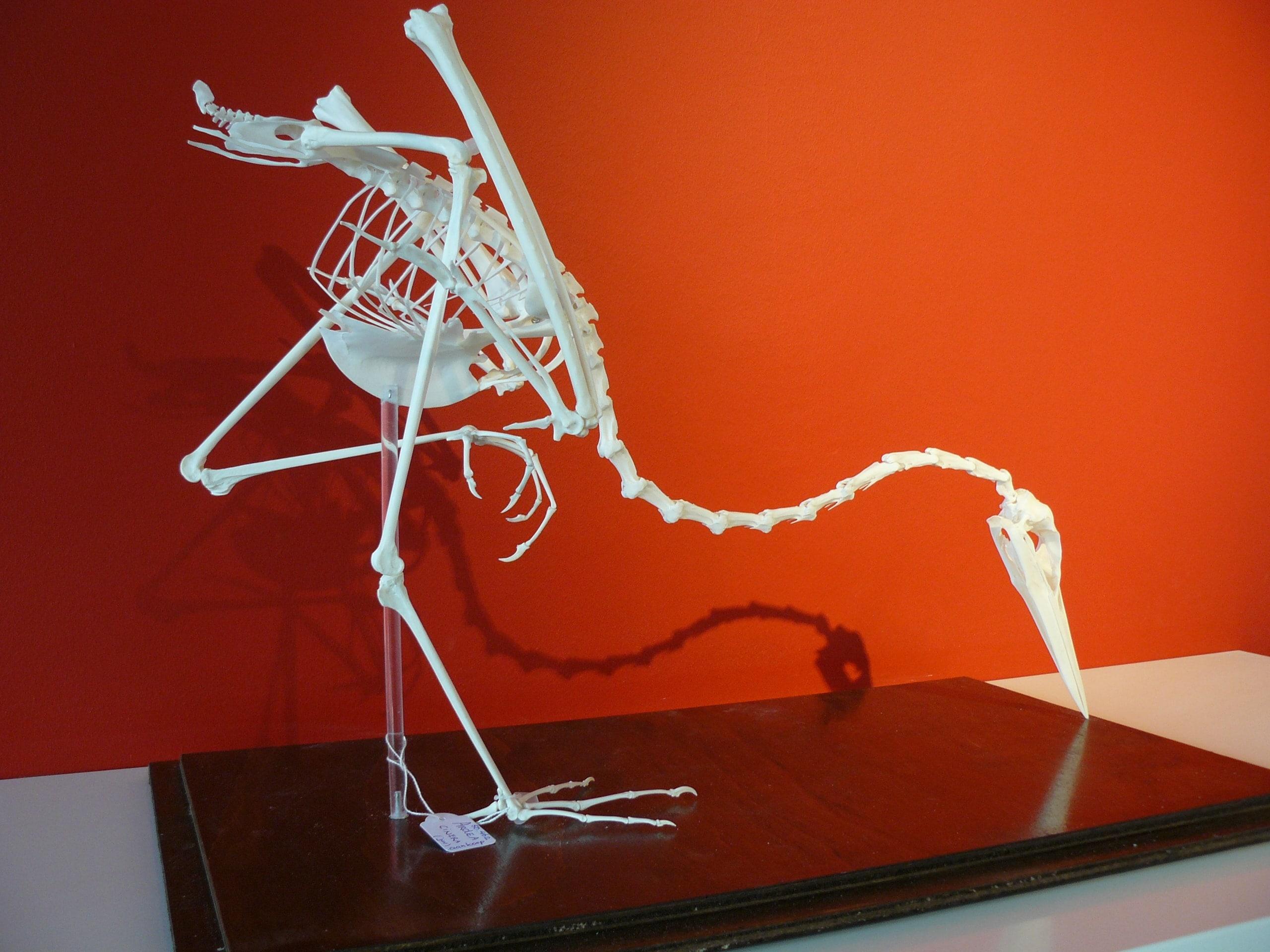 Skeletten | Blauwe Reiger | Natuur Museum Brabant