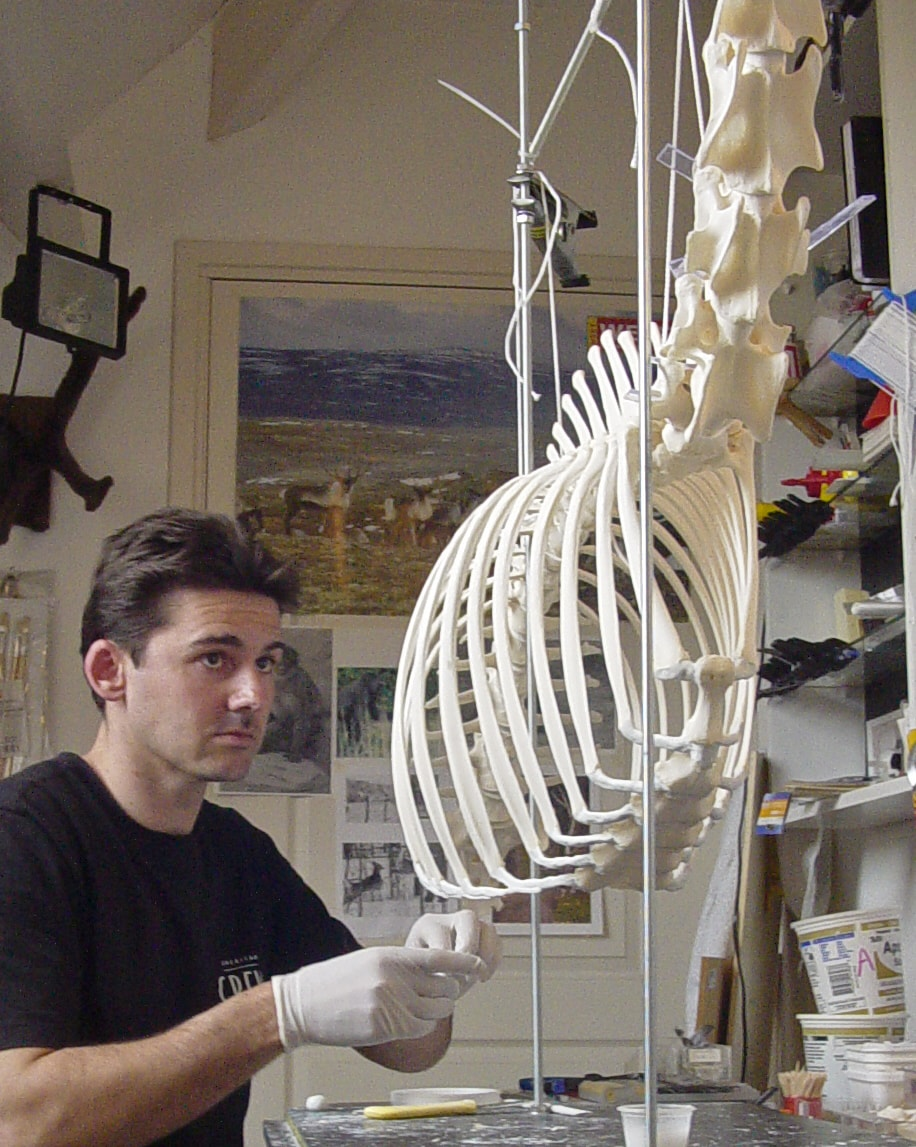 Skeletten | Edelhert | Holterberg