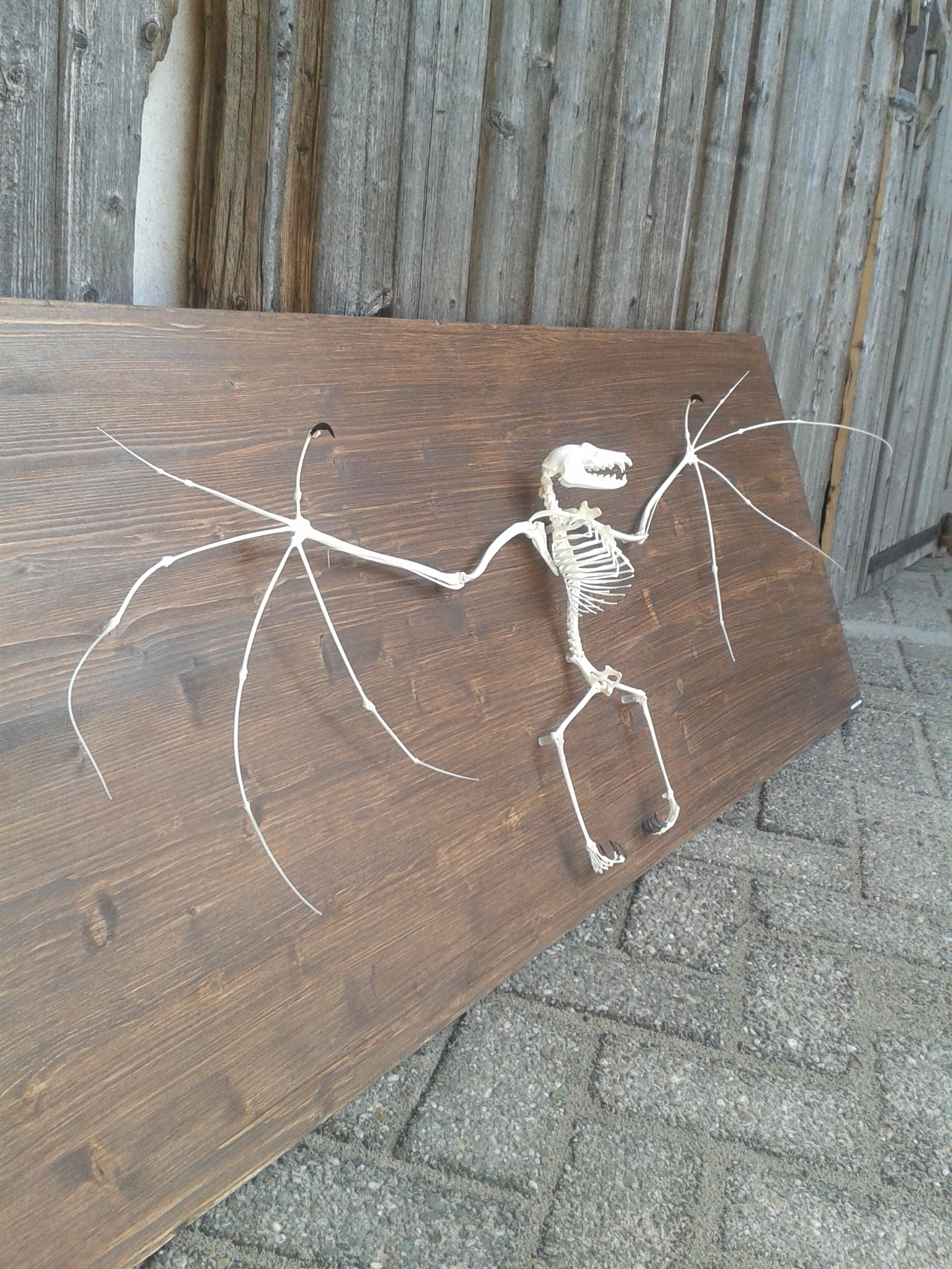 Skeletten | Vleerhond | Natuur Museum Brabant