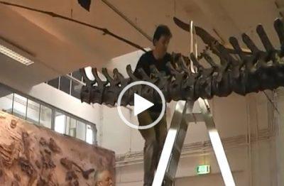 VIDEO Dinosaurier aufbauen | Natuur Museum Brabant (NL)