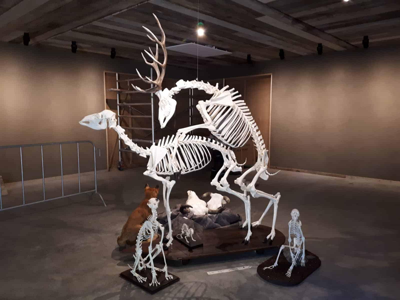 Skelette |  verschiedene Skelette | Limburghuis GAIA Zoo
