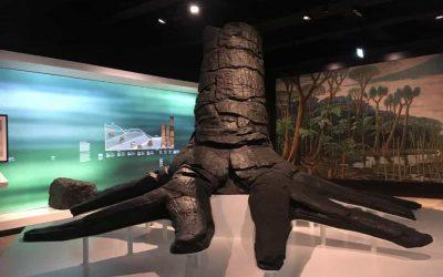 Fossiler Baum