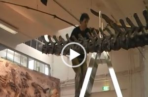 VIDEO | Building a Dinosaur