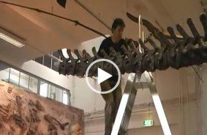 VIDEO | Building a Dinosaur