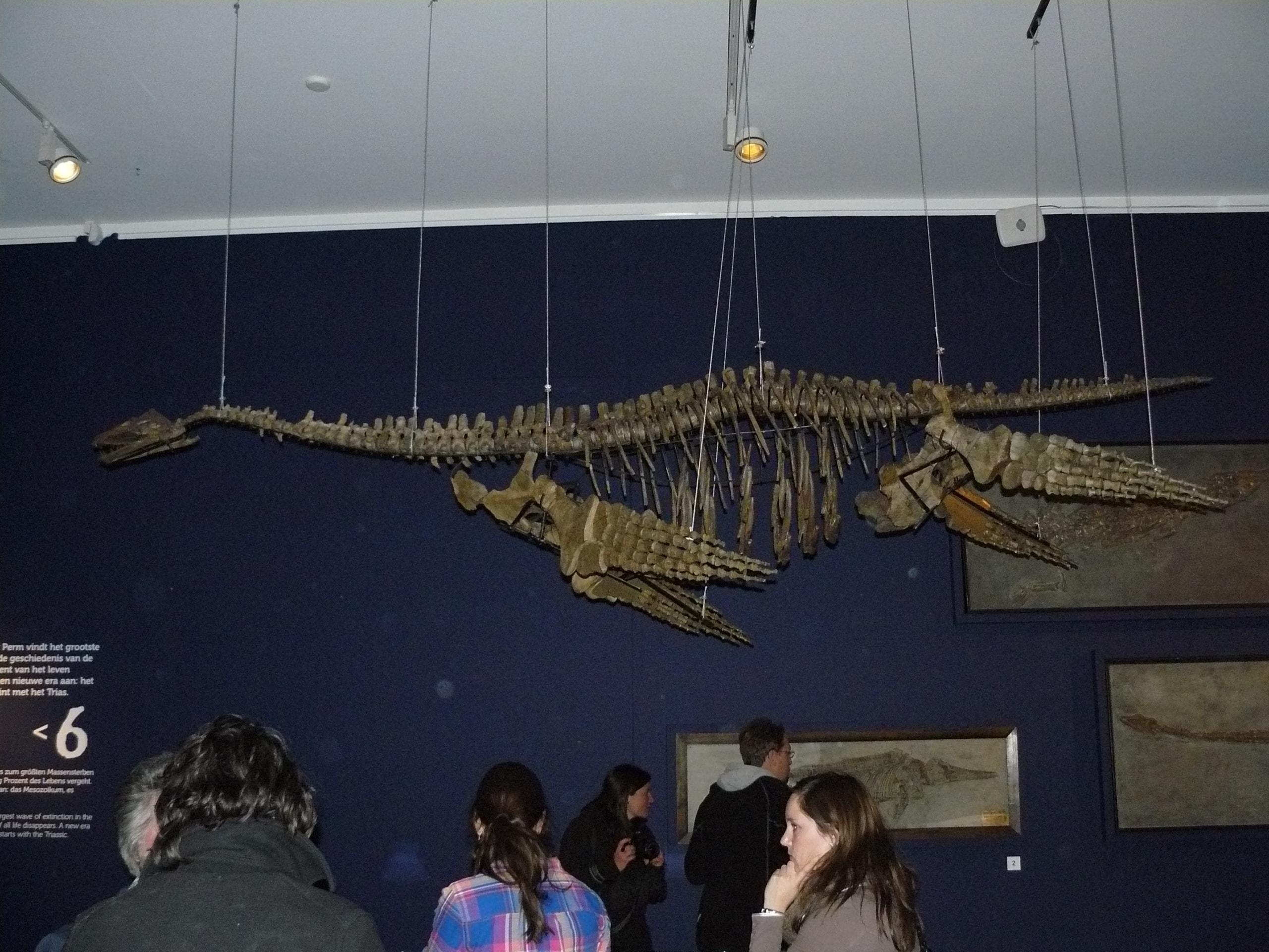 Fossielen & Dinosauriërs | Plesiosaurus III | Twentsewelle