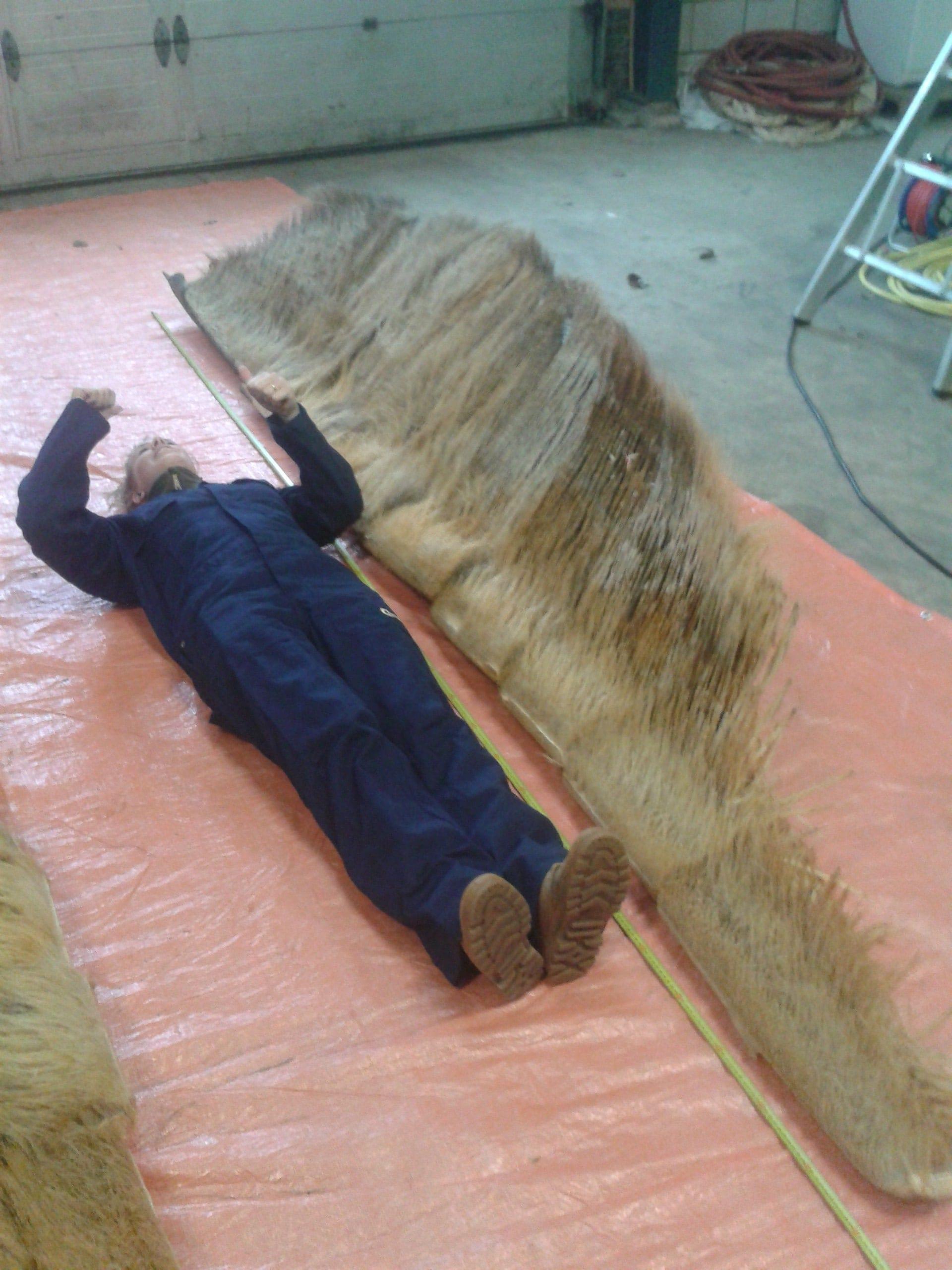 Huidpreparaten | Baleinen gewone Vinvis | Naturalis