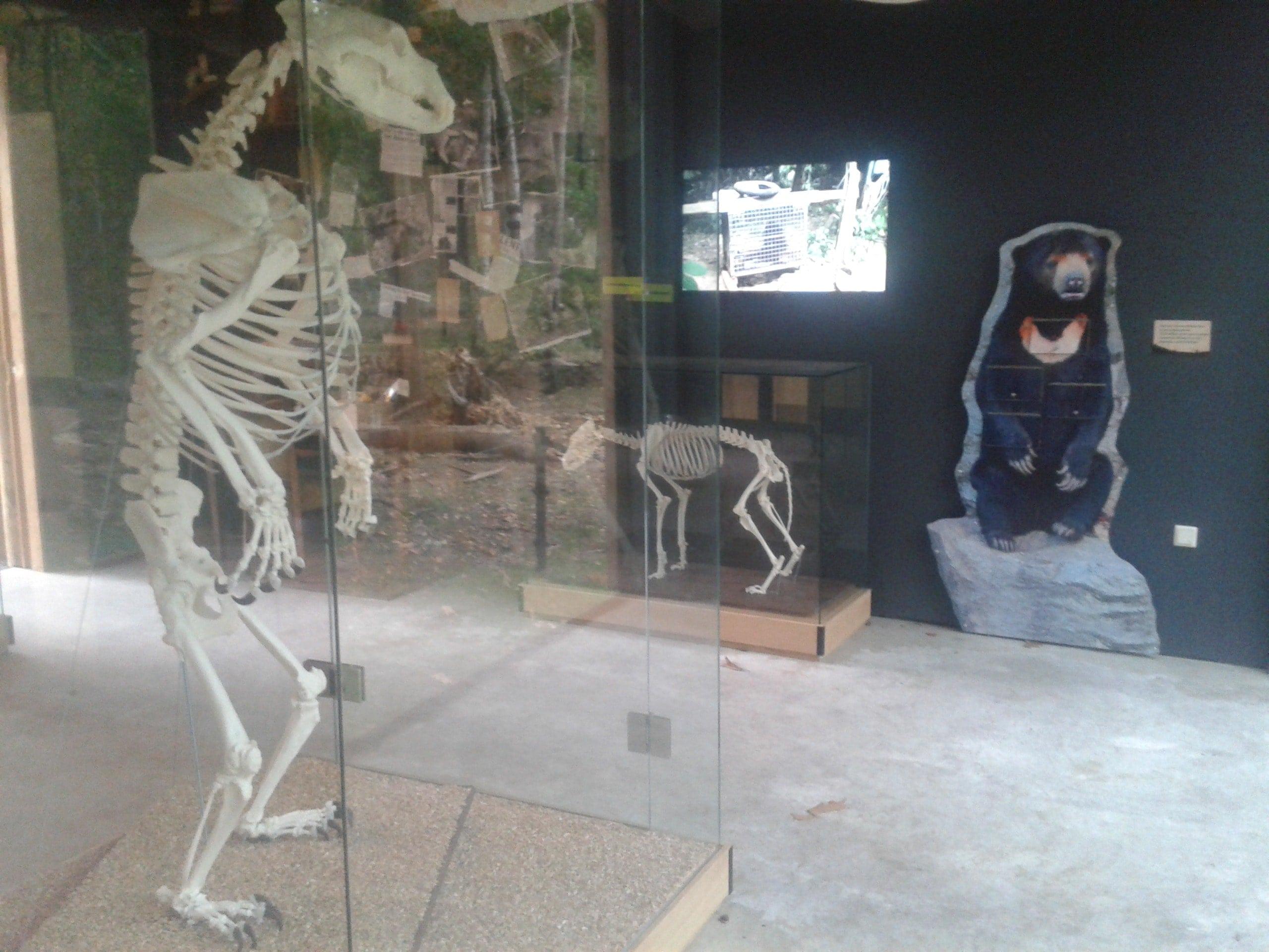 Skeletten | Beer IV | Ouwehands Dierenpark