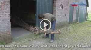 VIDEO | Diplodocus | TV Gelderland