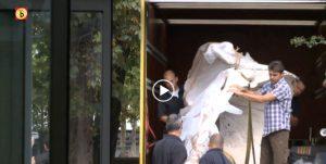 VIDEO | Cachalot | Natuur Museum Brabant | Netherlands