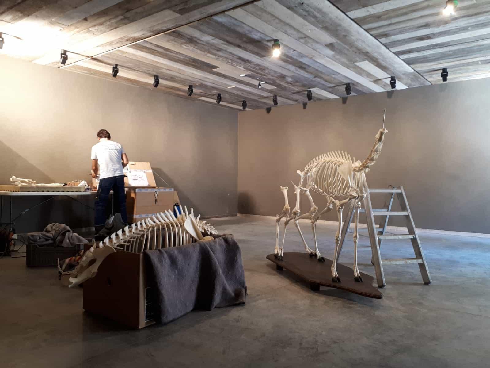 Skeletons | Mounting skeletons on Location | Limburghuis GAIA Zoo