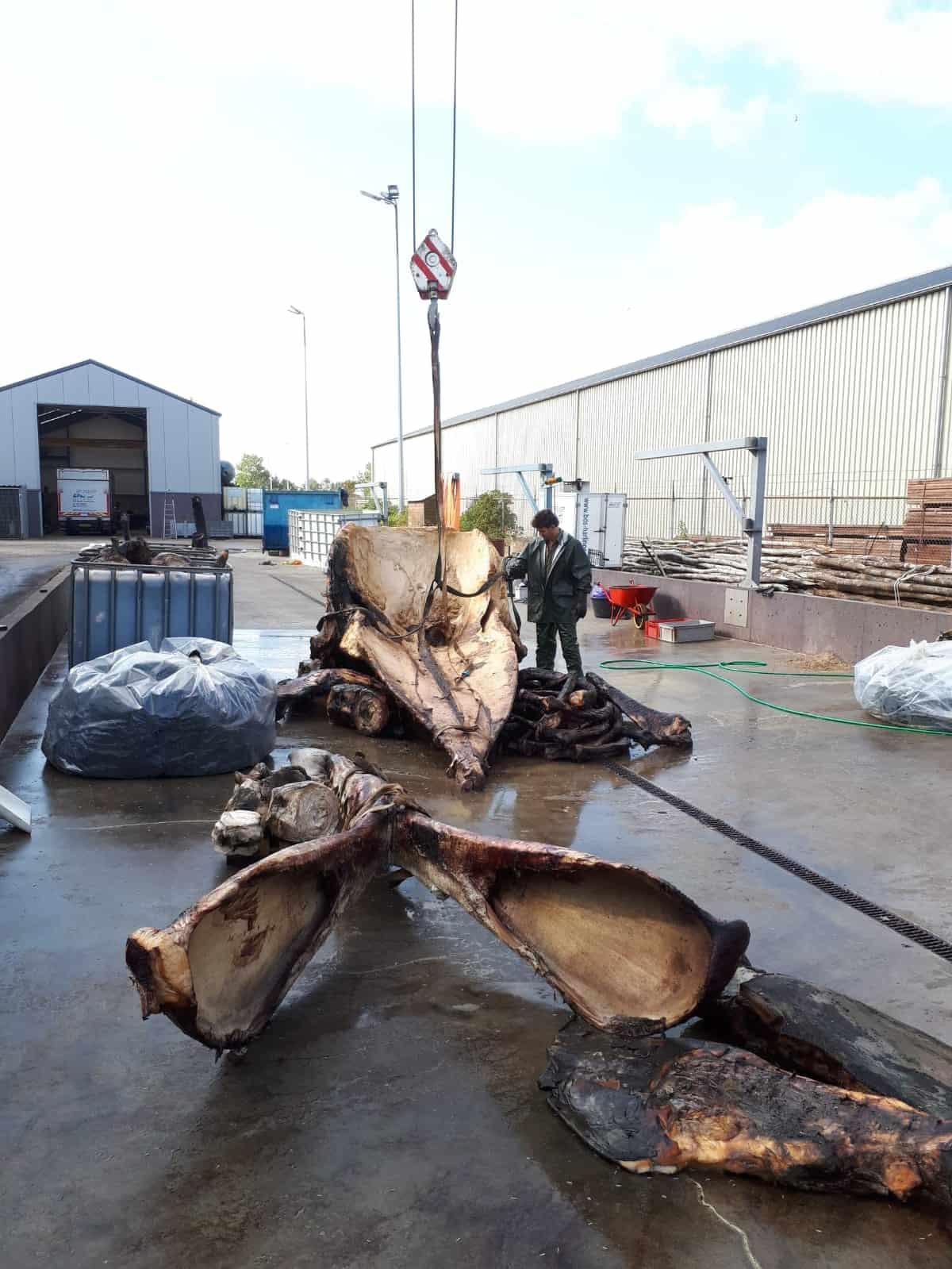 Skeletons | Dissection Sperm Whale in Den Helder II | Naturalis Biodiversity Center