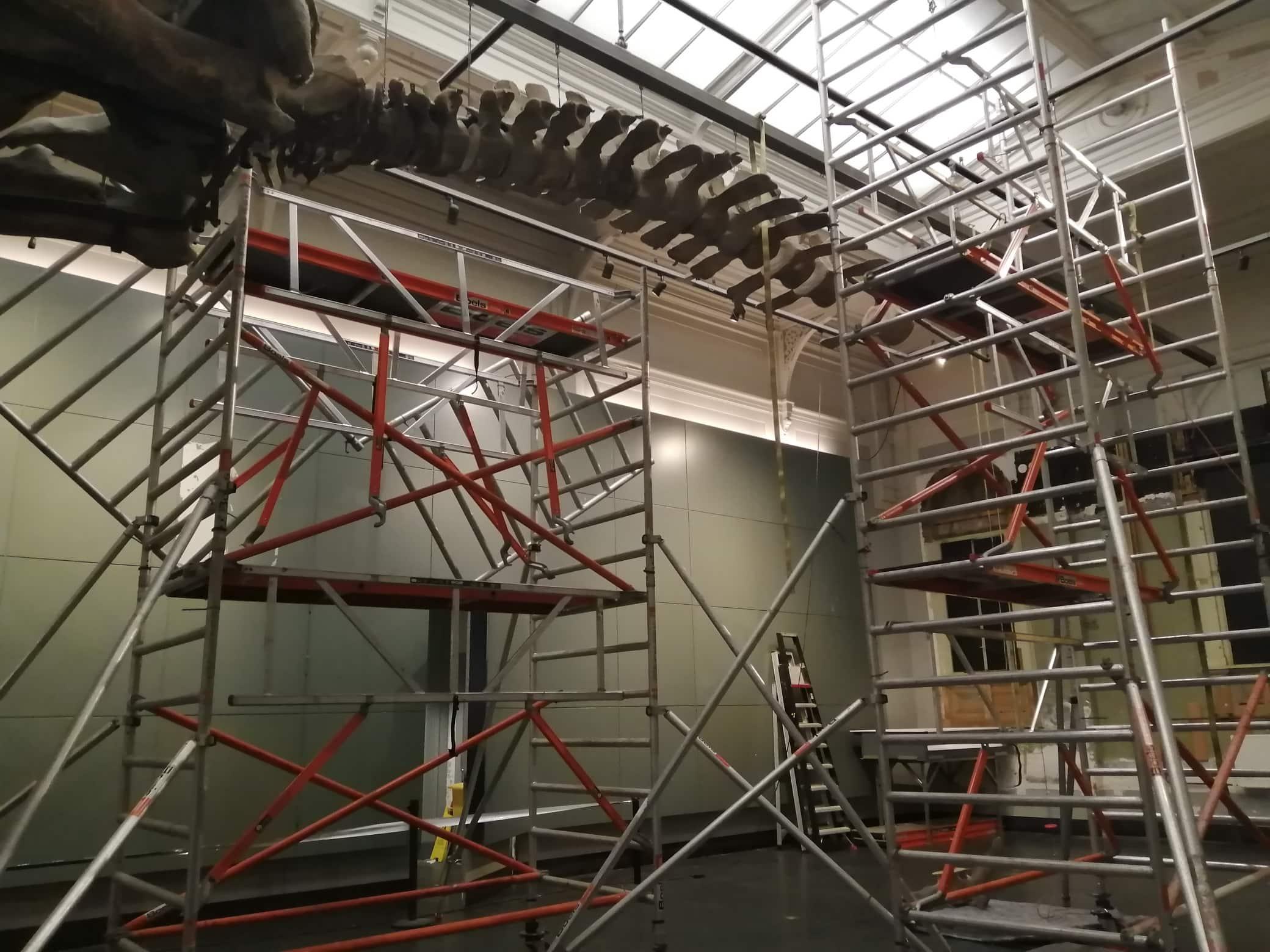 Moving whale skeleton | disassembly of the vertebrae | Artis
