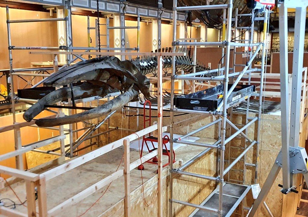 Skeletten  demontage bultr   National Museum of Ireland, Dublin