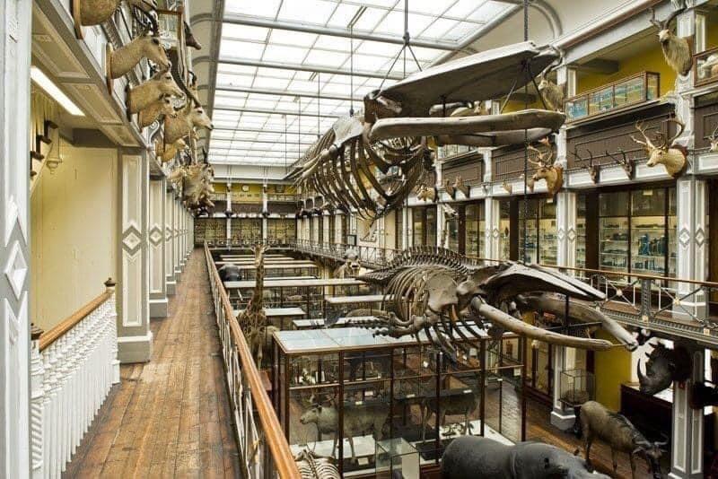Skeletten   demontage bultrug & vinvis (links), vóór demontage   National Museum of Ireland, Dublin