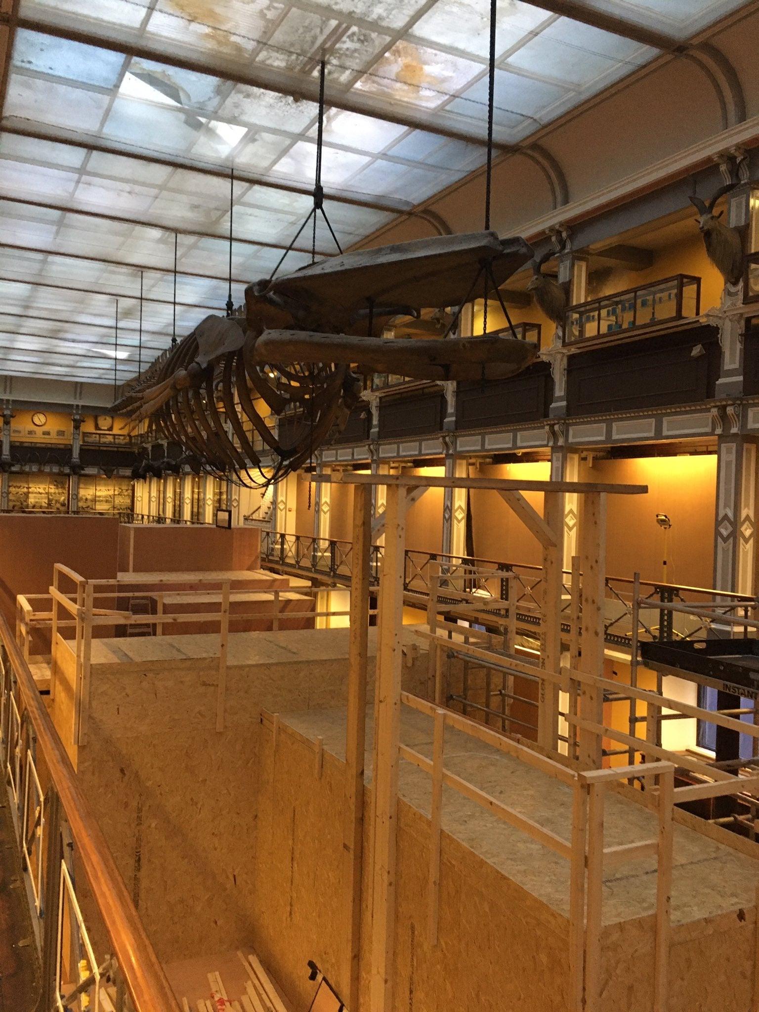 Skeletten   vinvis hangt nog   National Museum of Ireland, Dublin