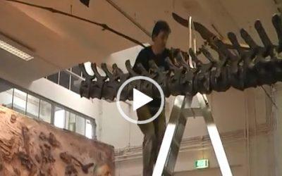 VIDEO Dino opbouwen Natuur Museum Brabant