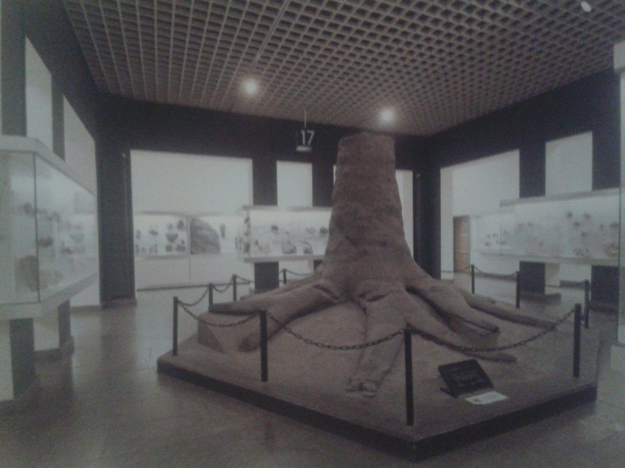 Fossielen & Dinosauriërs | Fossiele Boom vóór demontage | Bergbaumuseum Bochum, Duitsland