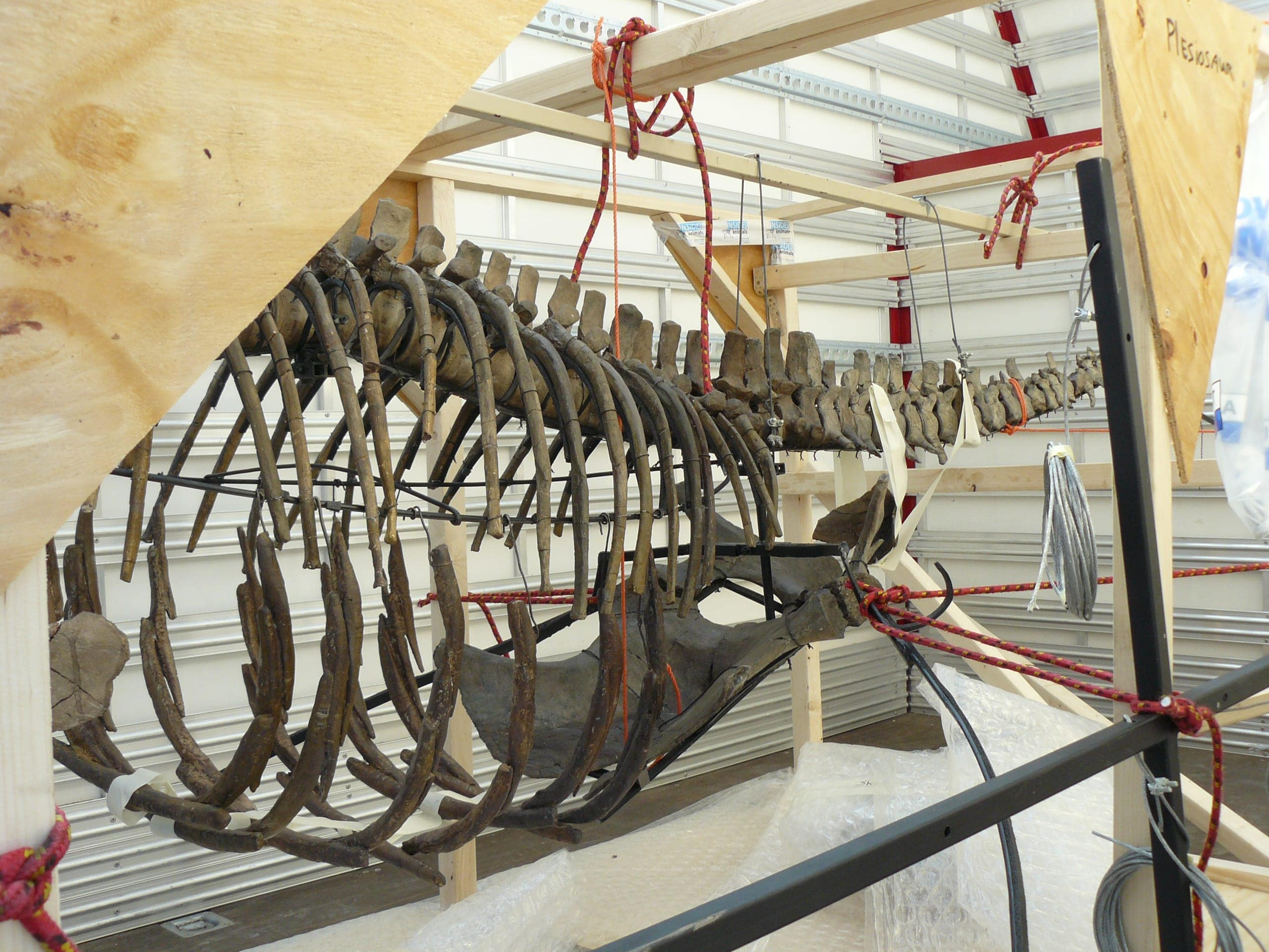 Fossielen & Dinosauriërs | Plesiosaurus II | Twentsewelle