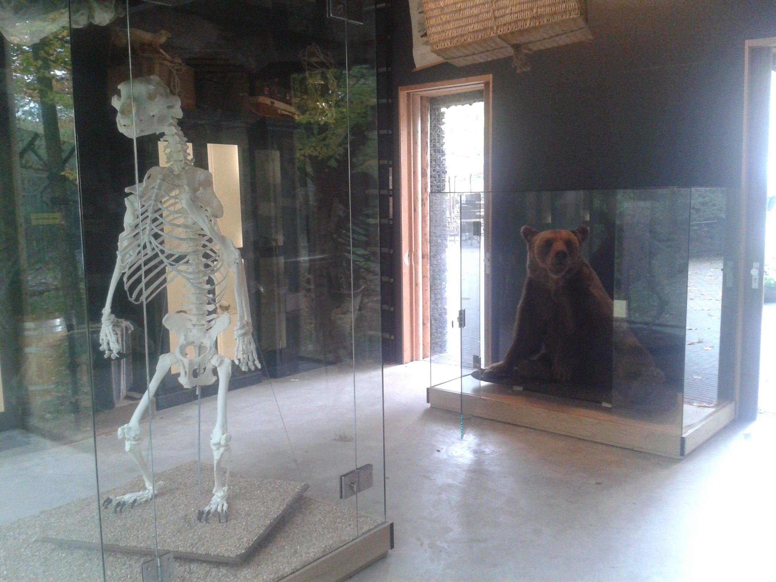 Skeletten | Beer III | Ouwehands Dierenpark