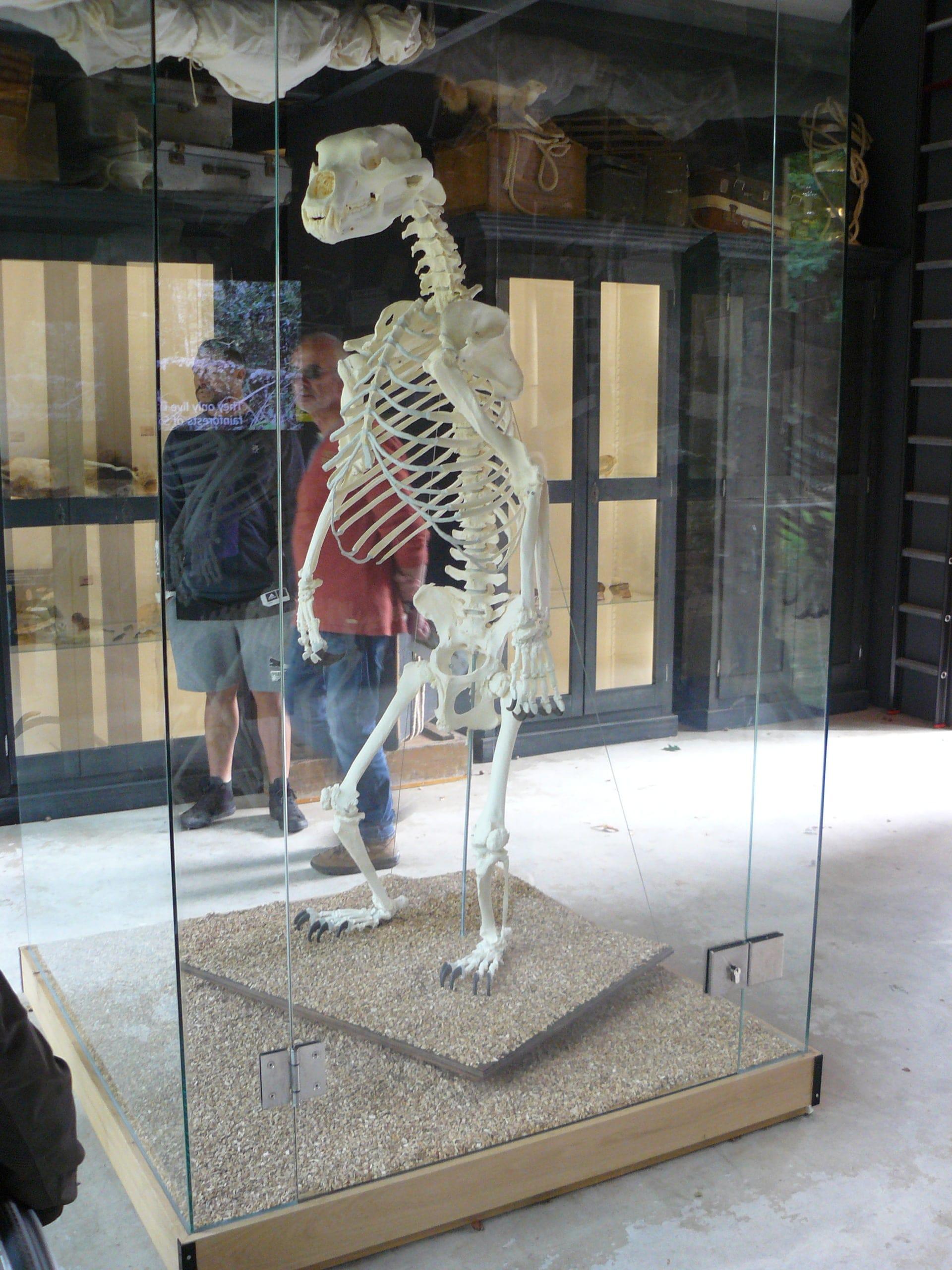 Skeletten | Beer II | Ouwehands Dierenpark