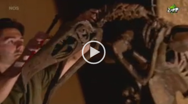 VIDEO Argentavis Gaia Zoo   NOS Jeugdjournaal