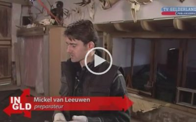 VIDEO Potvis Ambergris | TV Gelderland