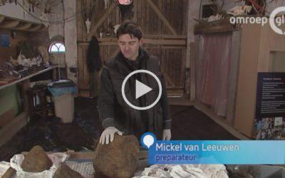 VIDEO Potvis Ambergris | Omroep Gelderland