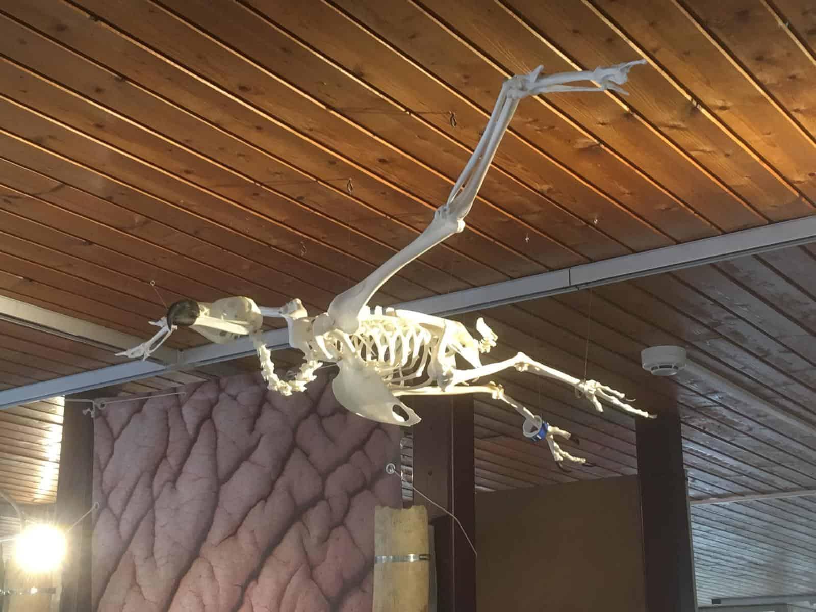 Skeletten | Monniksgier | Ouwehand Zoo