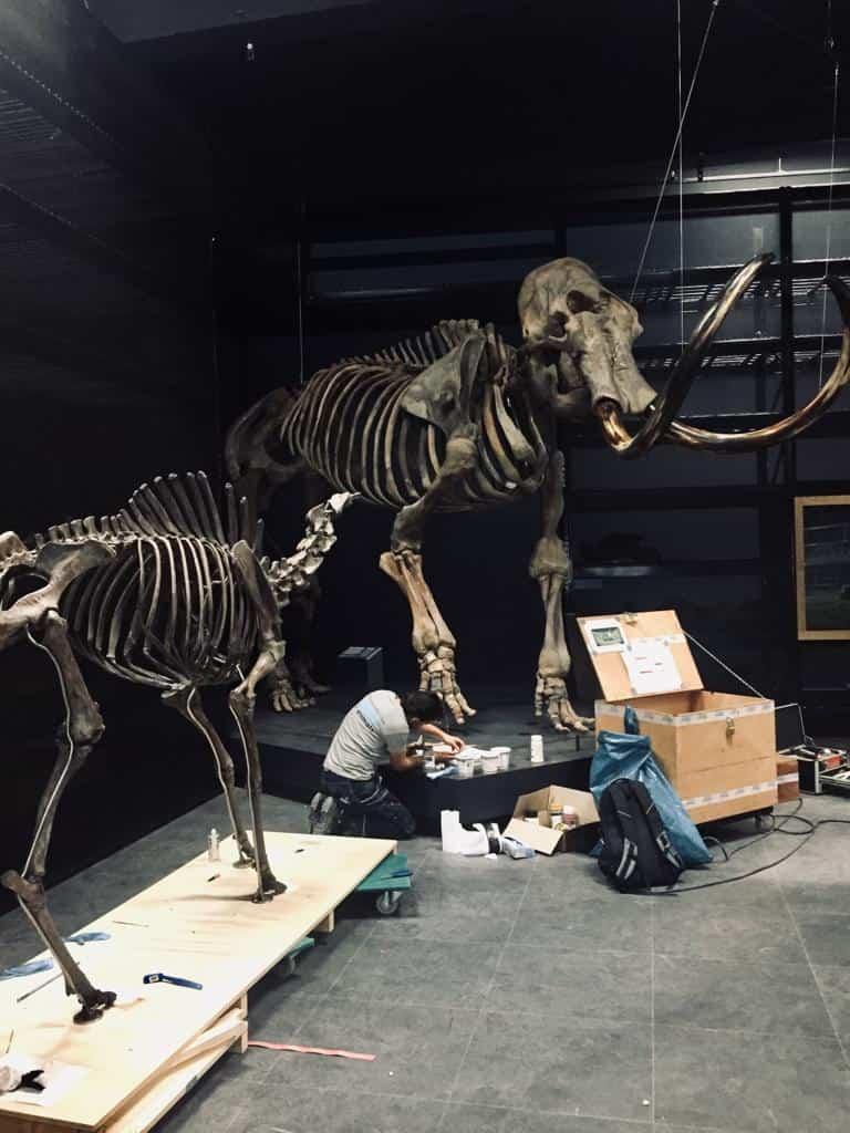 Skeletten | restauratie mammoet & reuzenhert  | Naturalis Biodiversity Center