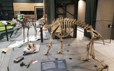 Montage edelhert en holenbeer | Naturalis Biodiversity Center