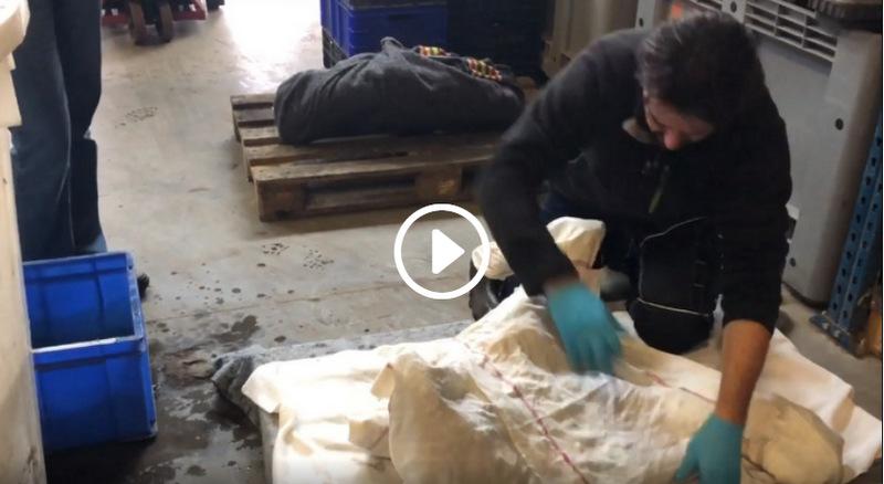Conserveren mammoetbotten voor ADC Archeoprojecten