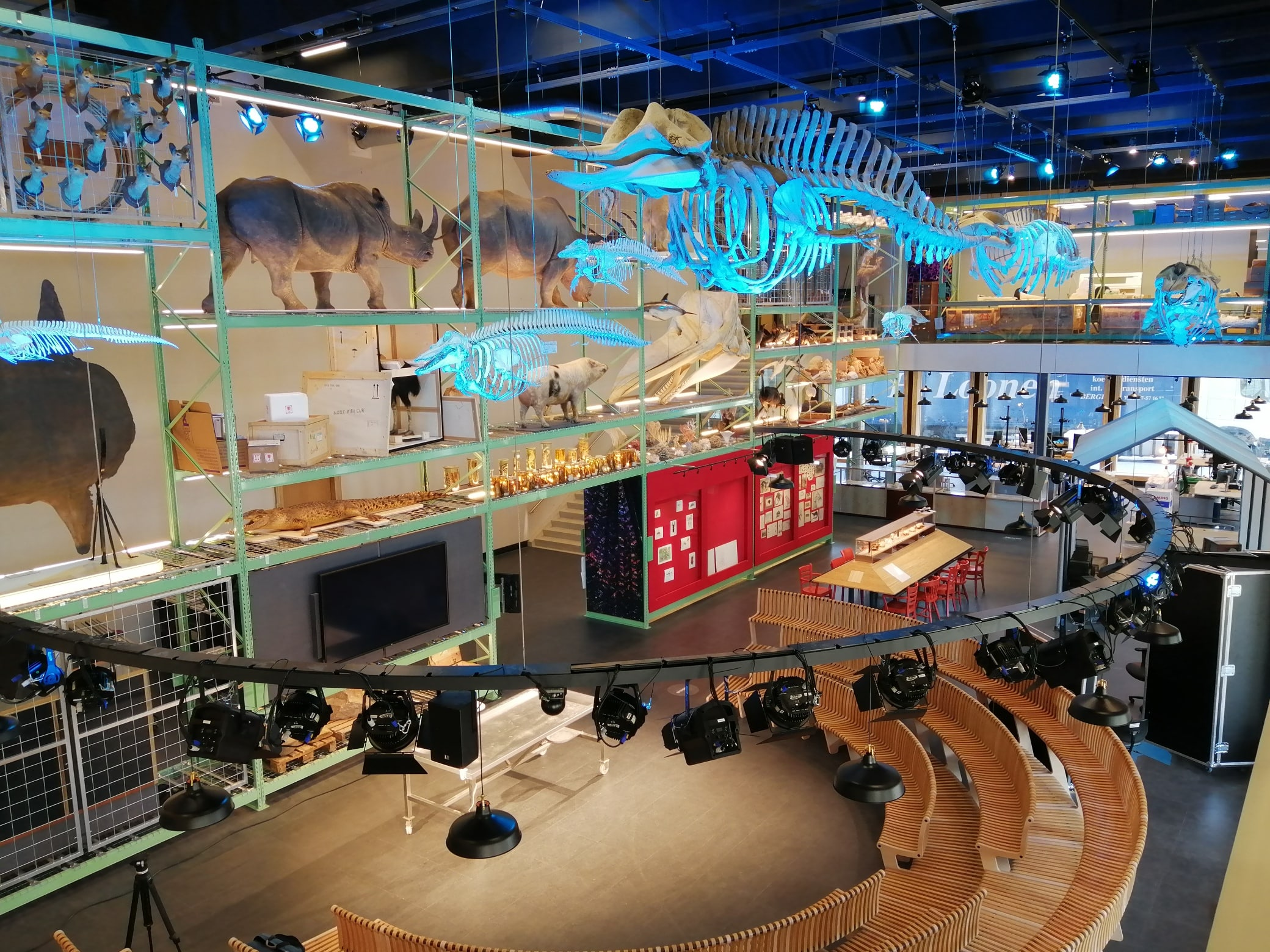 Skeletten | oplevering restauratie en montage, diverse zeezoogdierskeletten  | Live Science zaal - Naturalis Biodiversity Center