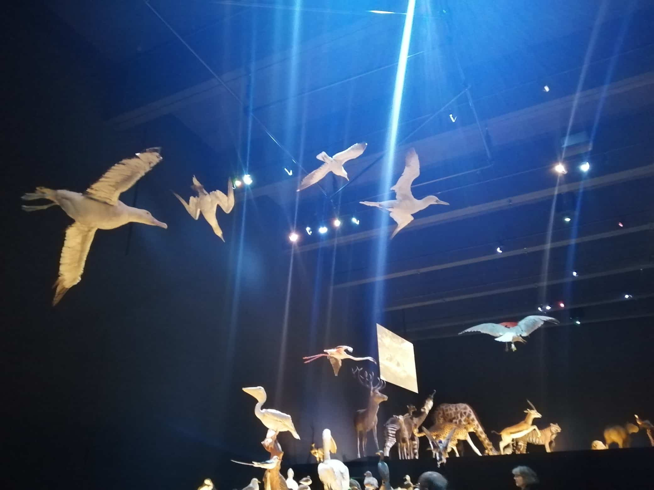 Expo & Educatie | ophangen diverse vliegende vogels | Naturalis Biodiversity Center (zaal Leven)