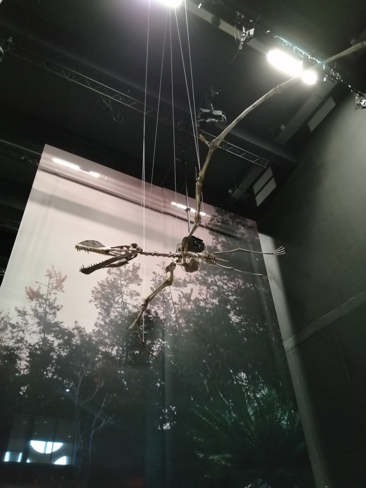 Fossielen & Dinosauriërs | oplevering Coloborhynchus skelet | Dinozaal - Naturalis Biodiversity Center