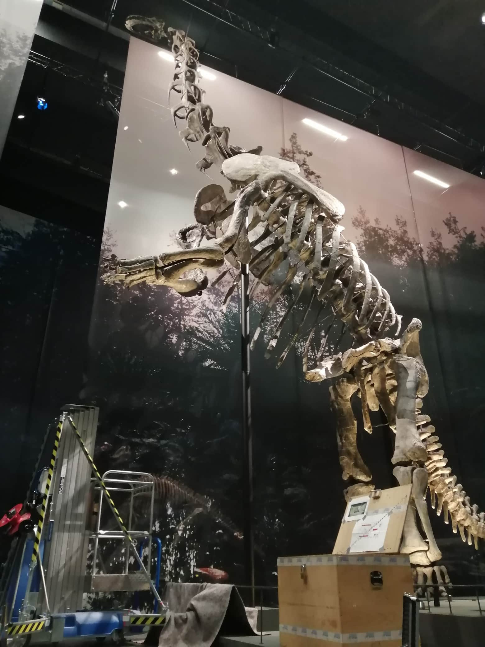 Fossielen & Dinosauriërs | restauratie nek Camarasaurus | Naturalis Biodiversity Center