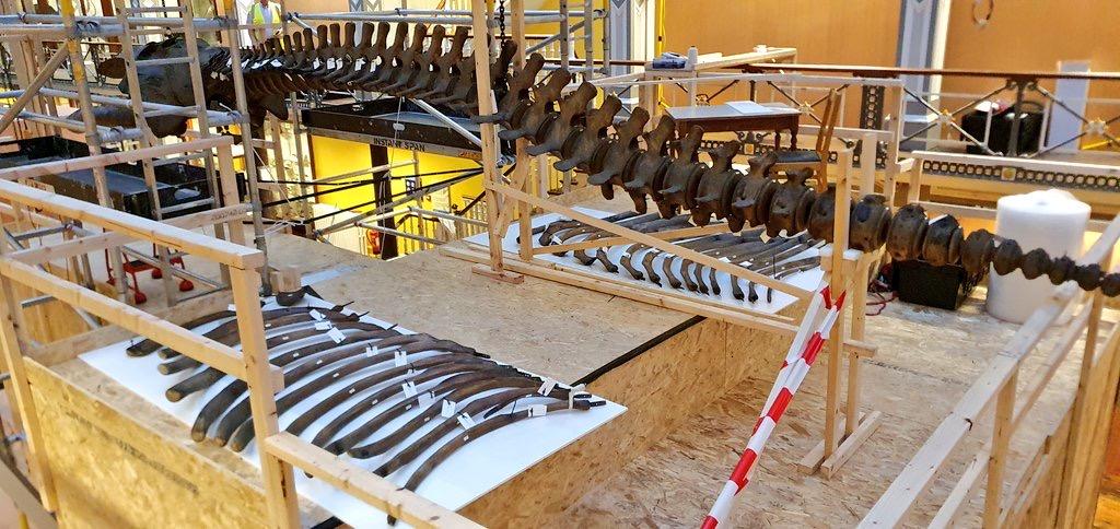 Skeletten |demontage bultrug | National Museum of Ireland, Dublin