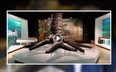 Restauratie fossiele boom voor Bergbau Museum Bochum (D)