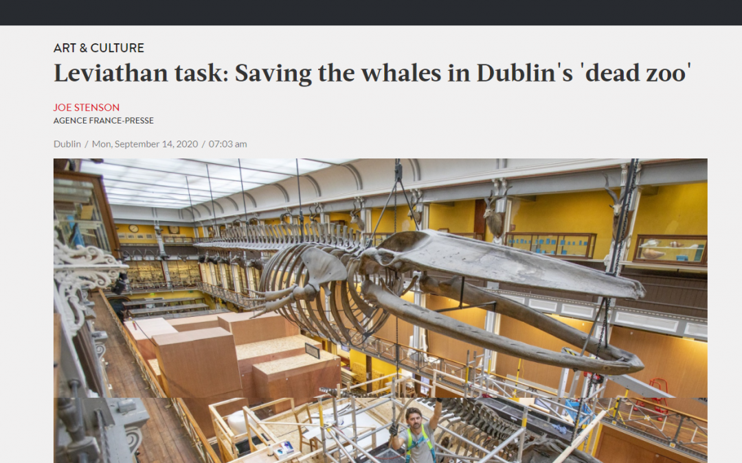 The Jakarta Post | demontage skelet bultrug | National Museum of Ireland –  Natural History | Dublin (IRL)